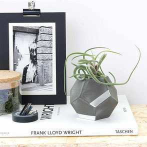 Aged Dark Dodecahedron Silver Concrete Air Plant Holder by PASiNGA