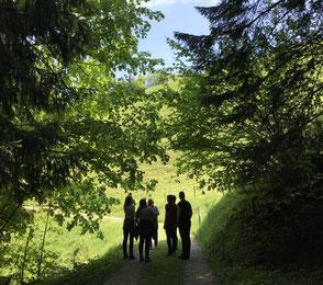 Wegwarte, Einführungskurs Wildkräuter, Heilkräuter bei FuchsundHase im Emmental