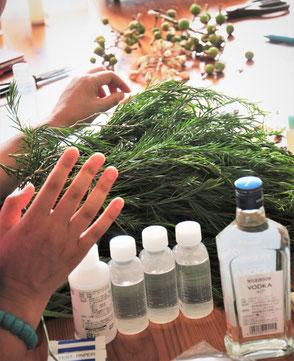 ハーブを収穫してチンキづくり体験のできる神奈川のアロ魔テラピー教室