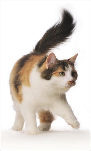 Foto Katze 2