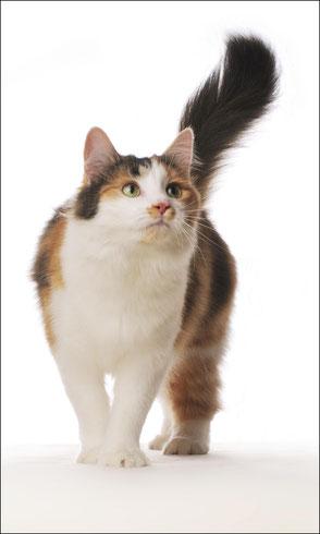 Foto Katze 1