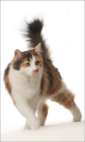 Foto Katze 3