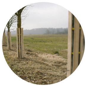 Schutz von Bäumen durch einen Baumschutz / Stammschutz