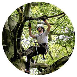 Ökologische Baumpflege, Baumschnitt und Baumarbeiten