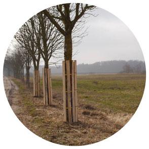 Stammschutz zum Schutz der Bäume einer Allee