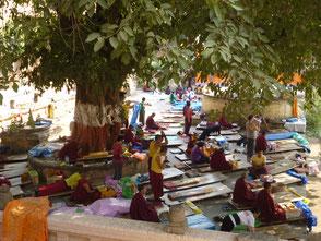 ブッダガヤーで修行に励むチベット僧たち
