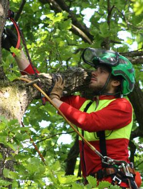Wir betreiben Baumpflege und Baumfällung im gesamten Raum Köln Bonn