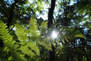Natur und Wandern in Altena