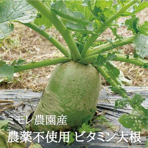 ミモレ農園 農薬不使用 ビタミン大根