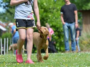 Hund läuft neben Frau an der Leine