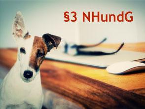 Terrier mit Brille und Laptop §3 NHundG