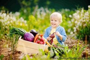 Kleinkind mit Gemüsekiste im Beet