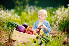 kind erntet Gemüse im Beet