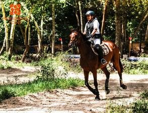 タイの乗馬の写真