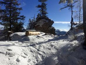 Winter, Winterwanderung, Predigstuhl, Bad Goisern, Geführte Wanderung, Schneeschuwanderung, Blauer Himmel, Sonne, Hike & Nature