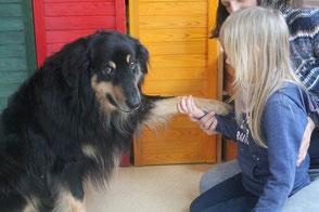 Hund in der Therapie erfreut Kinder, Jugendliche, Praxis für Logopädie und Erwachsene