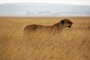 Traumreise mit Safari in Tansania - Equatours