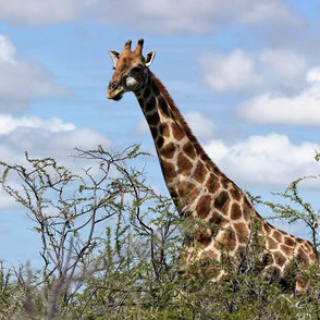 Wildes Uganda Traumreise