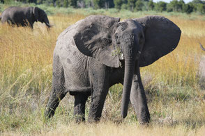 Zimbabwe Safari Journeys - Equatours