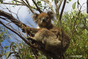 Traumreisen nach Australien - Equatours