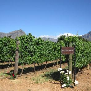 Weine in Stellenbosch