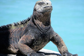 Galapagos Dream Journey - Equatours