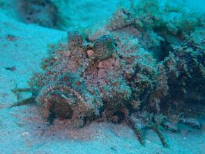 マレーシア レダン島 ダイビング ペランギ 菜ちゃんのページ