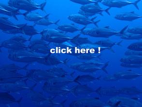 バリカサグ島のギンガメアジ
