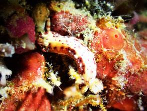 マレーシア ダイビング レダン島 ペランギ 菜ちゃんのページ