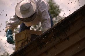 Bienenschwarm, am Hausdach