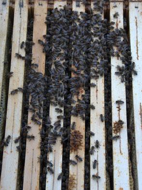 Bienen schon im Wintersitz