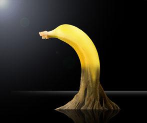 grafik-thielen-grafikdesign-webdesign-logodesign-bilddesign-bananenbaum