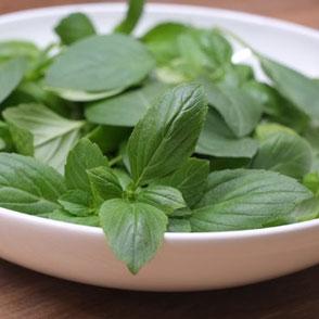Keto Küche frisches Basilikum für Pesto