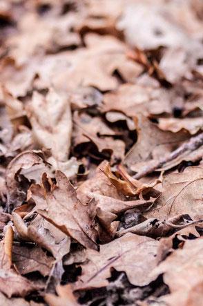 location aspirateur à feuilles