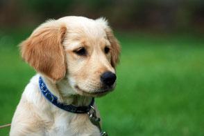 Hundeschule gooddog