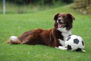 Hundeschule gooddog, über uns