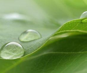 Nahaufnahme von Wassertropfen auf einem grünen Blatt. Im MBSR-Kurs von Heike Merkle in Frankfurt am Main lernen Sie, Dinge neutral wahrzunehmen und die Sinne zu schärfen für das was ist.