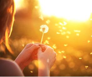 Eine Frau in der Abendstimmung hält eine Pusteblume in den Händen. Die Pusteblume steht für loslassen und Veränderung. Im MBSR-Kurs von Heike Merkle in Frankfurt lernen Sie leichter loszulassen.