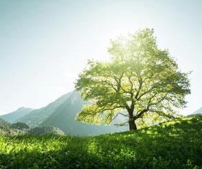 Das Bild zeigt einen großen, grünen Baum in einer Landschaft. Es symbolisiert den Frieden in sich zu entdecken und Freiheit zu erfahren inmitten von Stress und Hektik. Das können Sie in dem MBSR-Kurs von Heike Merkle in Frankfurt in einem 8-Wochen-Kurs er