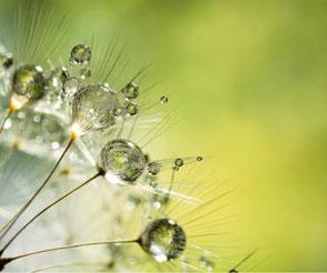 Detailbild von Sonnentau auf einer Pflanze. Im MBSR-Kurs von Heike Merkle in Frankfurt lernen Sie, den Blick nach innen zu richten und sich und den Körper genau wahrzunehmen.