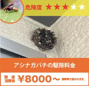 壁に作ったアシナガバチの巣