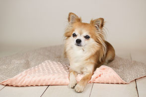 Hundedecke, Hund, Wunschdesign, handmade, personalisiert
