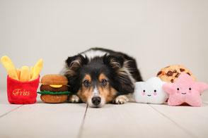 Hundespielzeug, Hunde