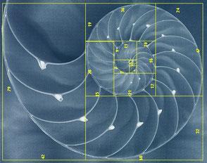 www.ronaldosephius.nl gulden snede Nautilus met berekening Bewust Groeien vanuit Innerlijke Kracht!