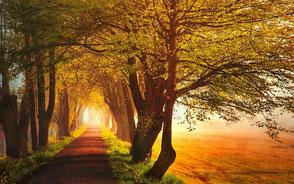 www.ronaldosephius.nl zon pad lente mist bomen in bloei Bewust groeien vanuit innerlijke kracht