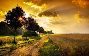www.ronaldosephius.nl ondergaande zon mist op water sloot ingesleten pad  Bewust Groeien vanuit innerlijke kracht