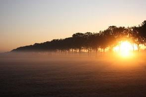 www.ronaldosephius.nl ondergaande zon mist weiland bomenrij Bewust groeien vanuit innerlijke kracht