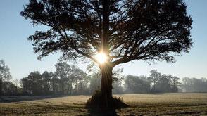 www.ronaldosephius.nl Weilandpad met Zon Bewust Groeien vanuit innerlijke kracht