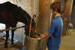 馬に餌を付けて、その日のお仕事が終わります。