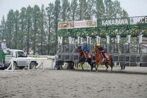 馬場で馬の調教・乗り運動を行います。